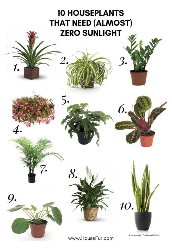 10 houseplants zero sunlight