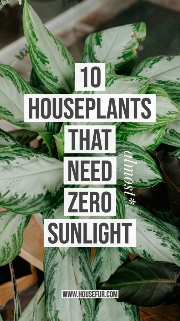 houseplants that need almost no sunlight