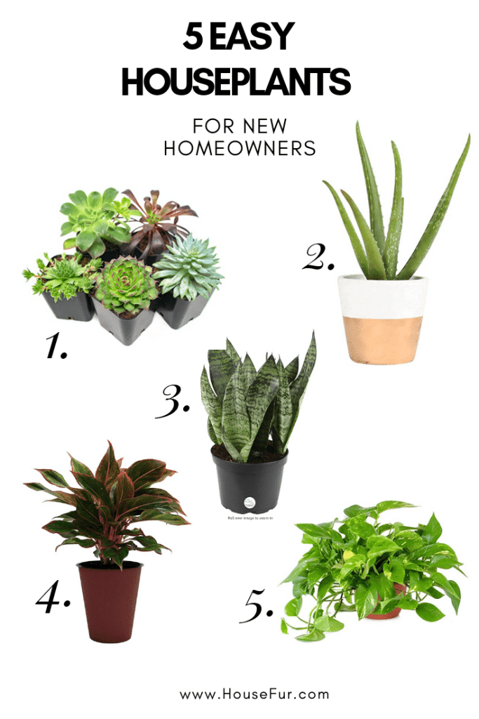 5 easy houseplants for new homeowners