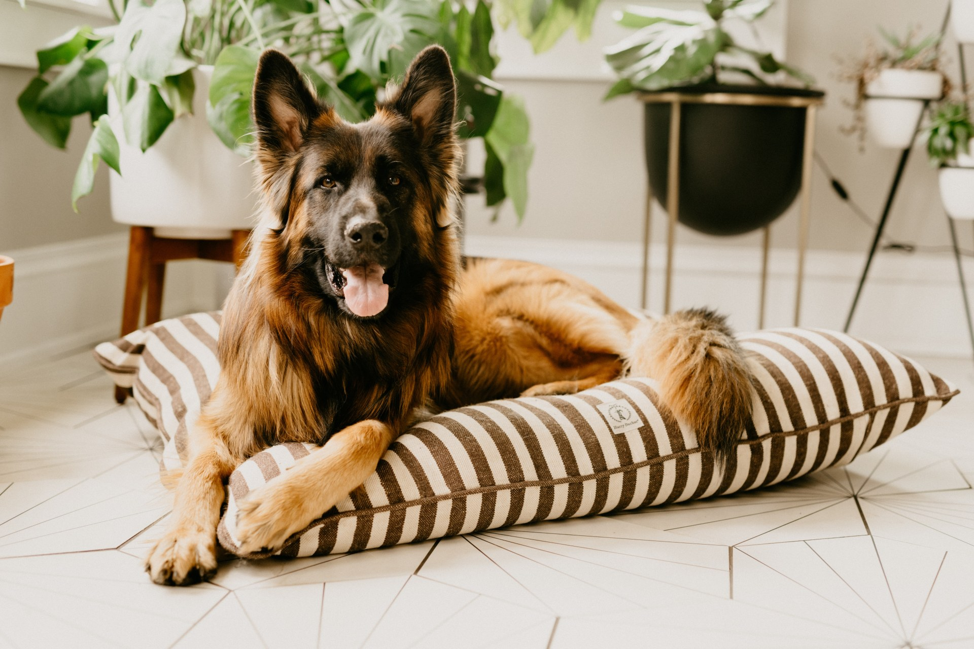 houseplants that are dog safe