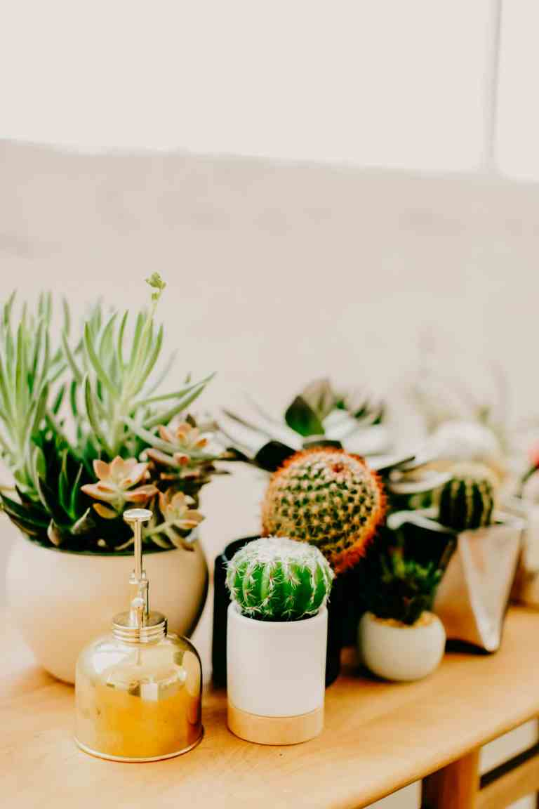 Houseplant Infestations: Everything You Need to Know About Houseplant Pests