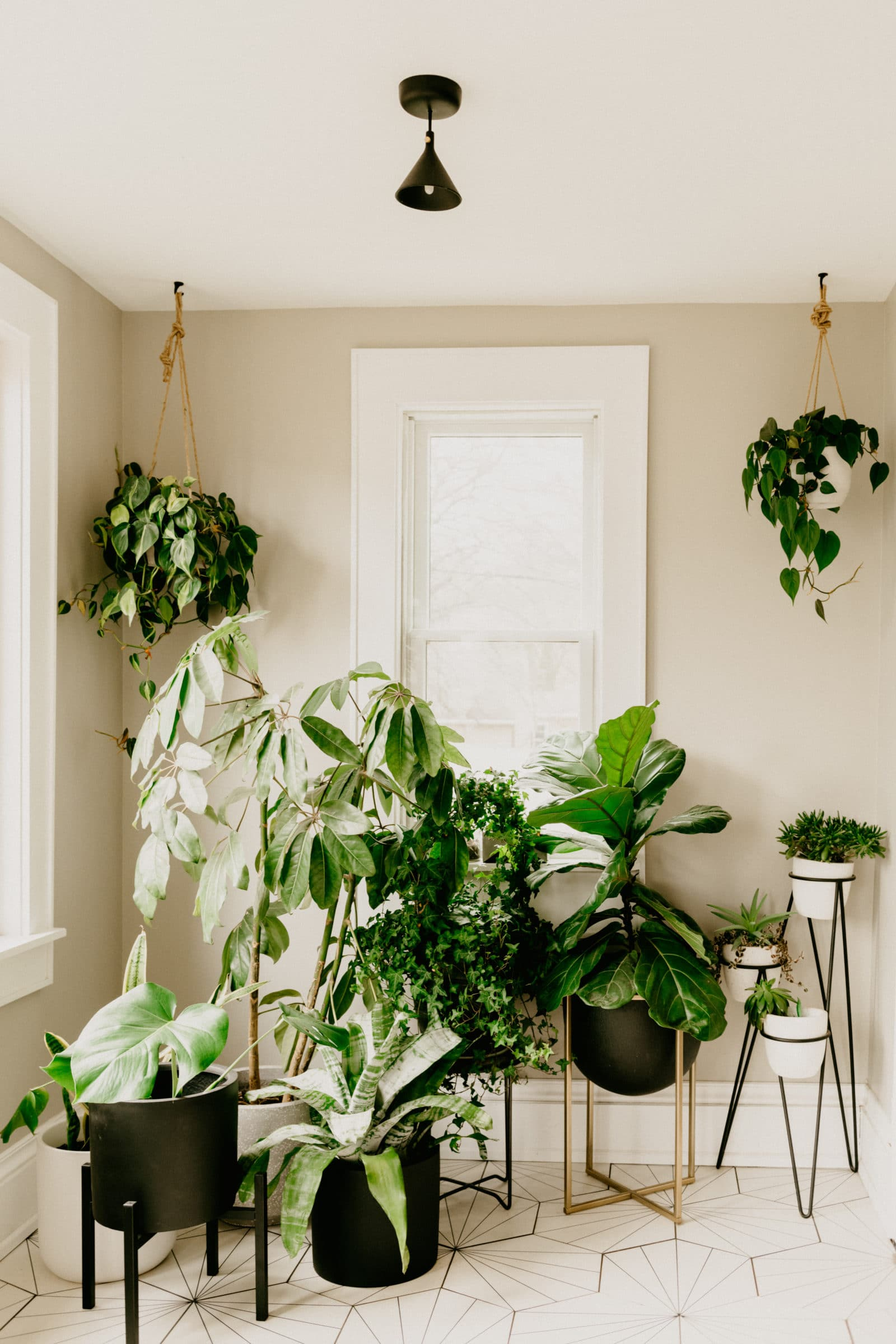 what to water your houseplants
