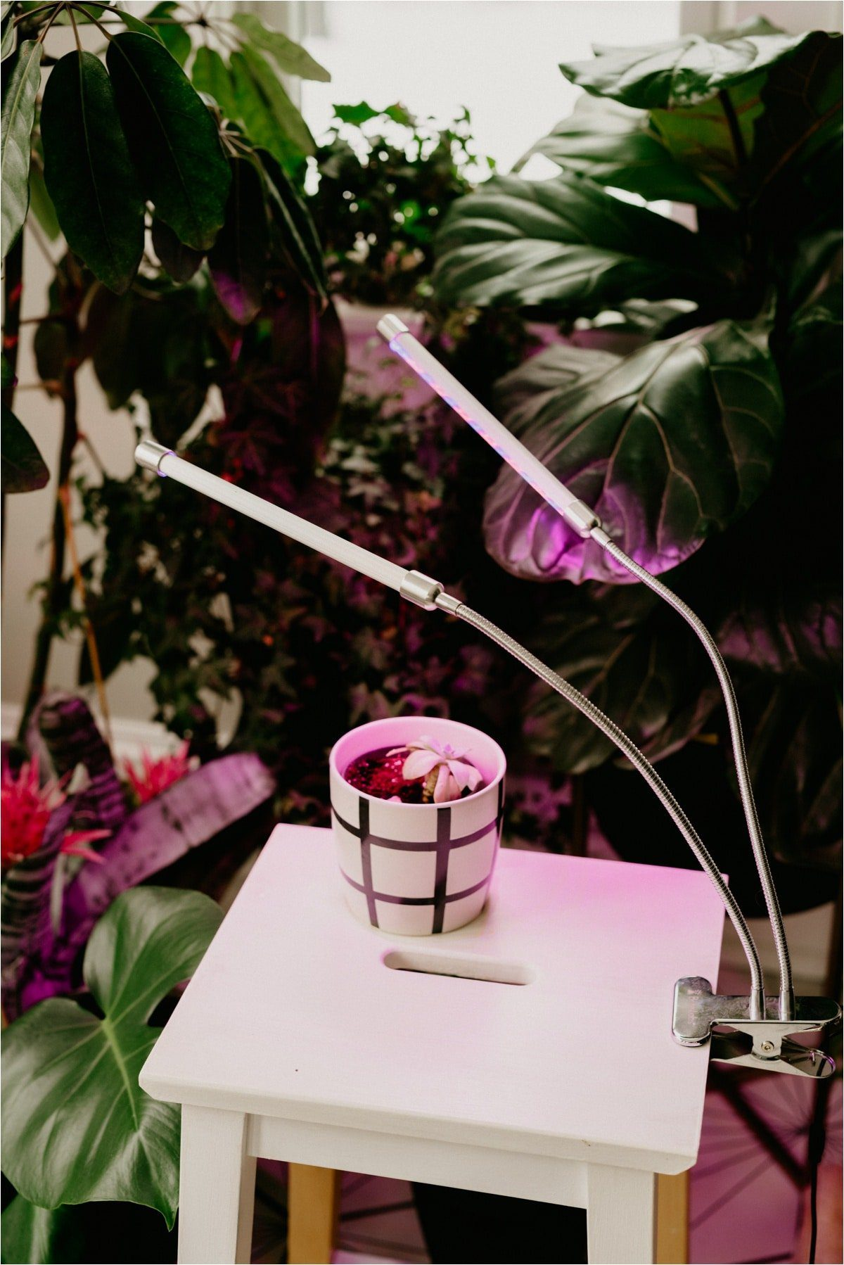 can plants live on artificial light