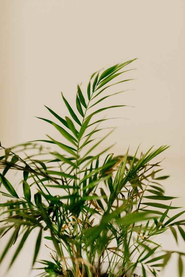 Victorian Parlor Palm