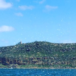 Sea spray as we motored past Barrenjoey Lighthouse.