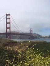 Golden Gate dreaming.