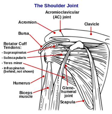 TYPE-2 DIABETES: AGED DIABETIC WITH A FROZEN SHOULDER OR