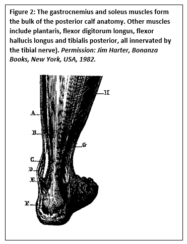PAINFUL CALF SYNDROME IN AGED T2DM: UPDATE 2019