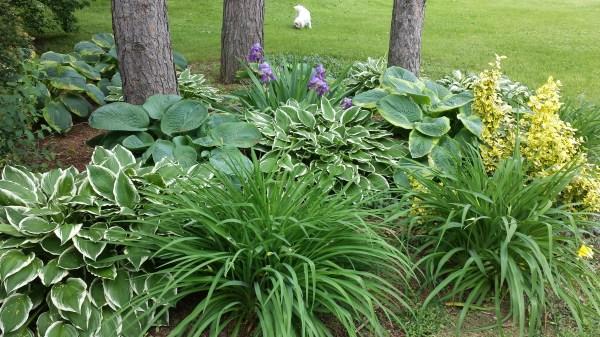 garden design with hosta