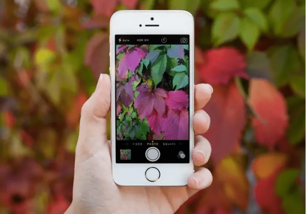Identify Any Plant With These Apps