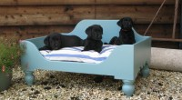 20 Unbelievably Cool Beds For Your Pet Dog