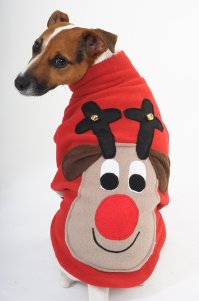 10 Dog Christmas Jumpers | HouseMyDog Blog