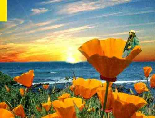 Rexx Life Raj – California Poppy 2 Album (download)