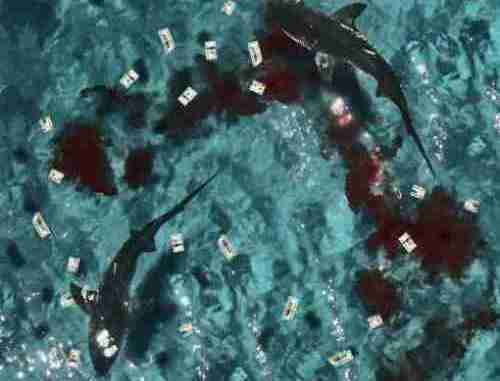 Shy Glizzy & Glizzy Gang – Don't Feed The Sharks album (download)