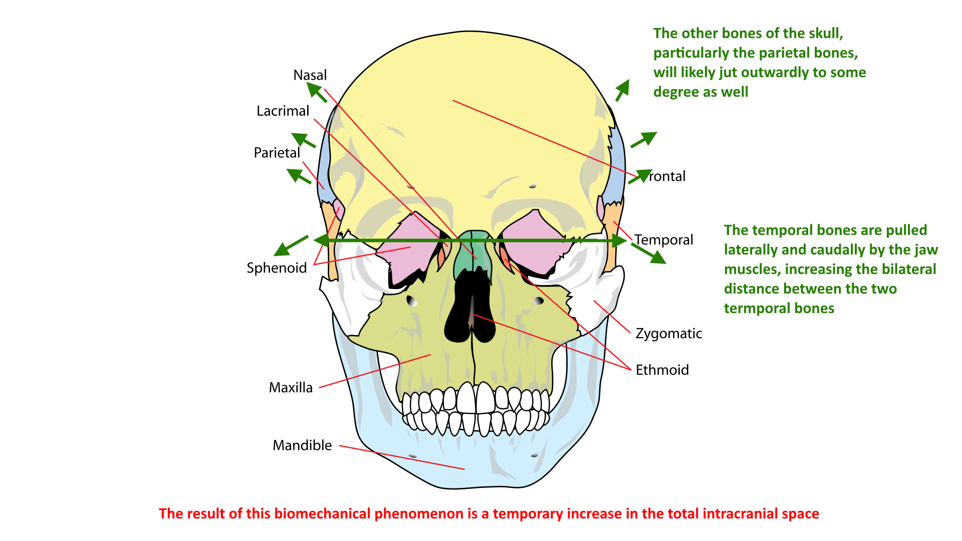 hight resolution of bilateral temporal bone displacement during bruxism