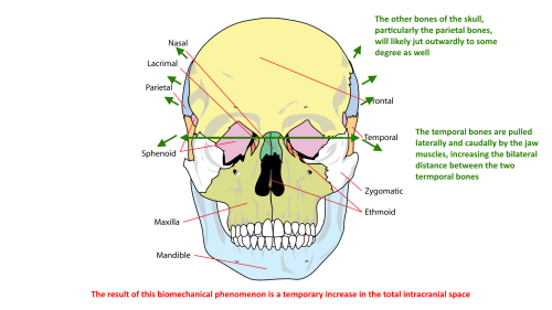 small resolution of bilateral temporal bone displacement during bruxism