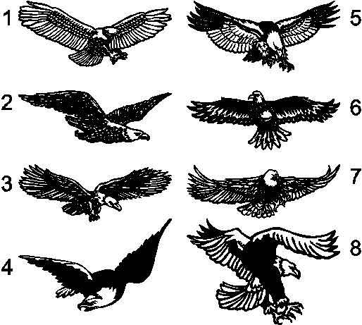 Huge Soaring Bald Eagle rear window decal decals sticker