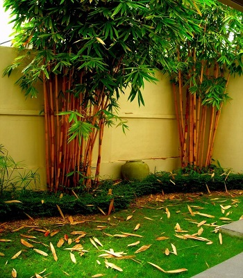 Garden Home Designs Strikingly And Decor Decorations In Sri Lanka. Wadula  Garden Professional Gardening And Landscaping Services