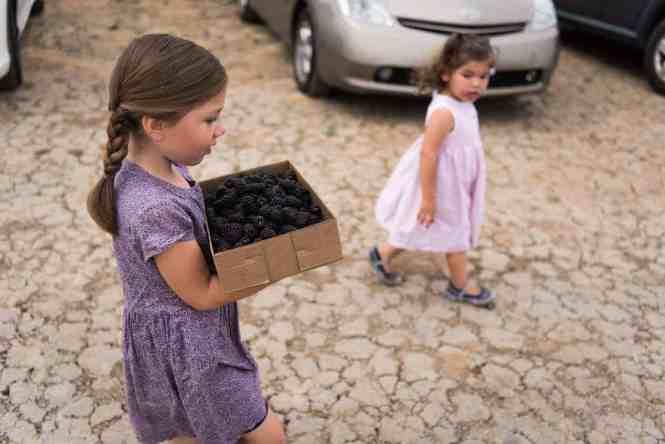 u-pick fruit blackberries