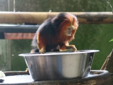 2017 Odense ZOO 130417 (8)