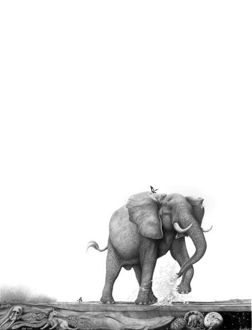 Elephant Pencil Drawing: Sally Forth | Bowen Boshier