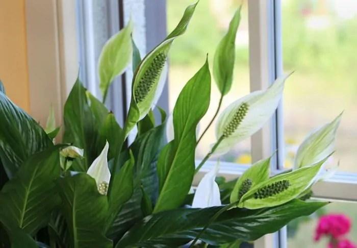 Top 10 House Plants With Long Lifespan | Houseplants Pro