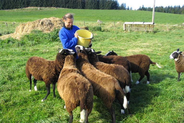 Farm sitting is a lucrative niche