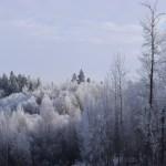 snowbird housesitters
