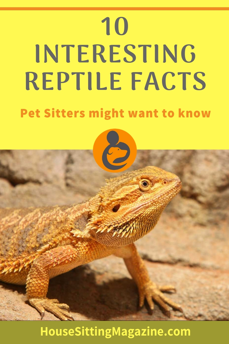 10 Interesting Facts About Reptiles Pet Sitters Might Like to Know #petsitting #reptilepetsitters #reptiles #reptileawarenessday