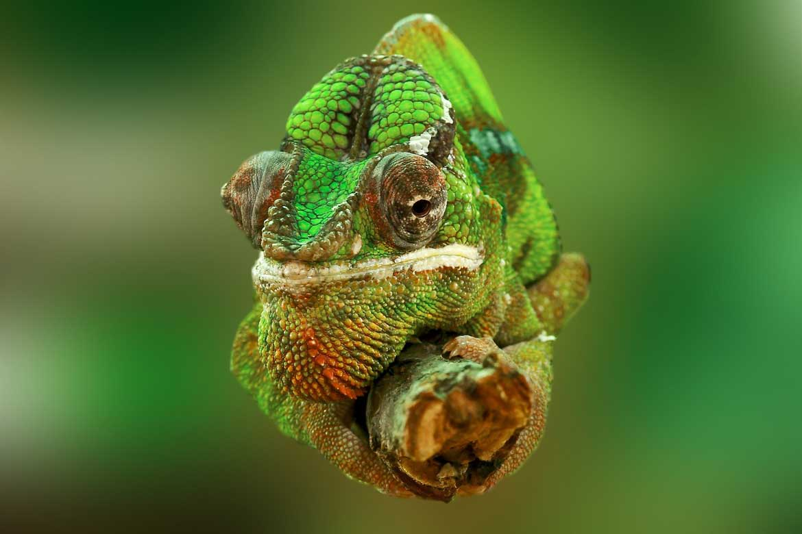 Changing Colour - Chameleon