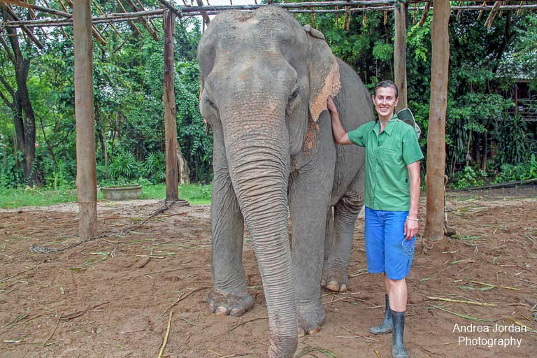 Volunteering at The Elephant Park Chiang Mai