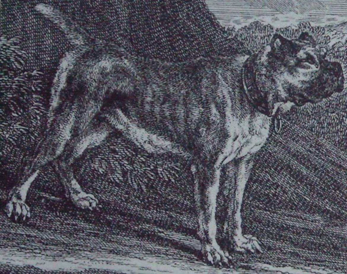 Boxers are descendants of the now extinct German breed, the Bullenbeisser