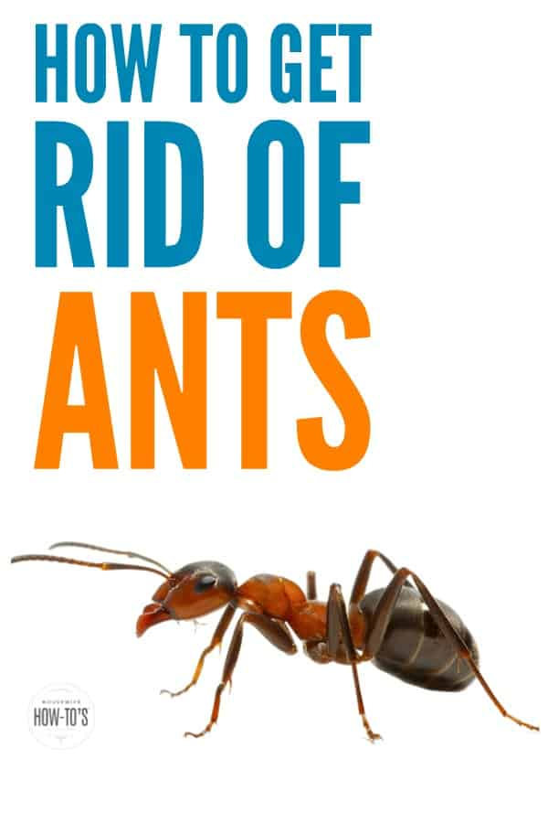 Best Way To Get Rid Of Ants In House Image Titled