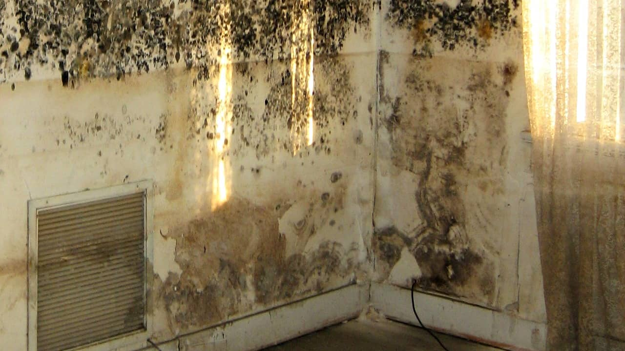 How To Remove Mold From Walls Housewife S