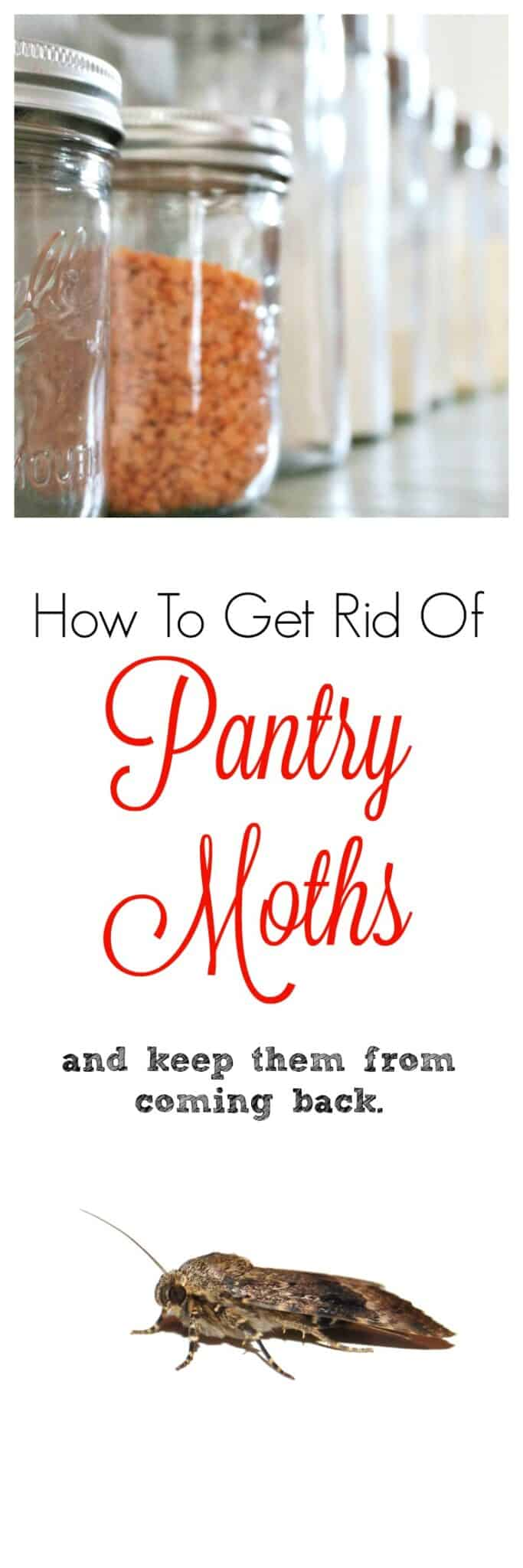 How To Get Rid Of Pantry Moths & Keep Them From Returning