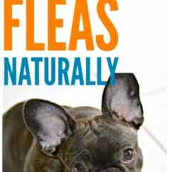 Fleas In Sofa No Pets Outdoor Rattan Sets Uk Get Rid Of Naturally On Your Pet And Home How To I Have Read Too Many Horror Stories About