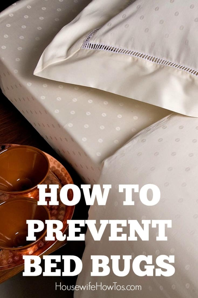 How To Prevent Bed Bugs  Simple Steps To Protect Your Family
