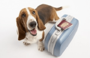 Vacation Planning For You And Your Pet House With A Heart