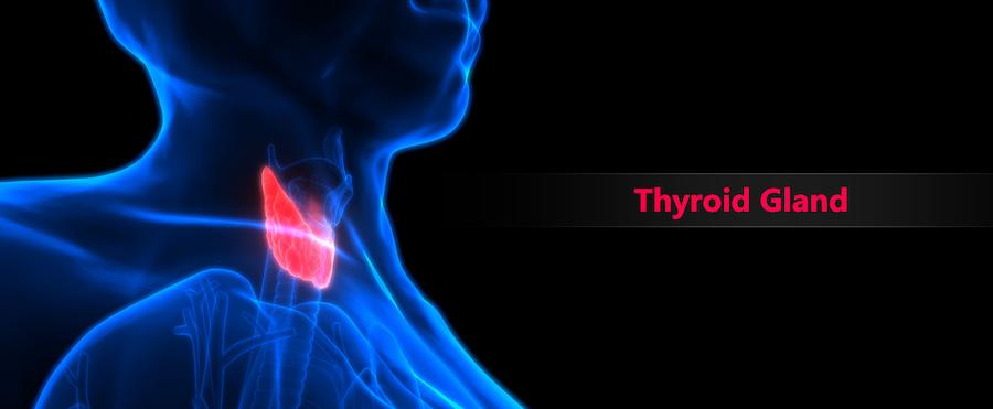 Thyroid Gland In Senior Citizens