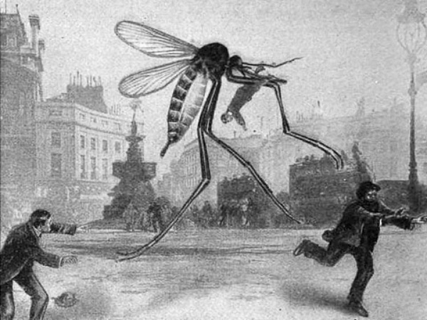 Image result for gigantic mosquito
