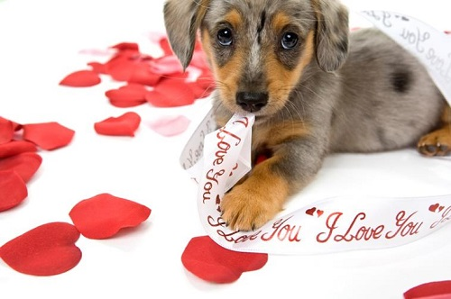 Be Mine, Valentine Puppy