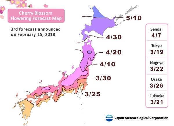 Cerezos en flor Japon 2018