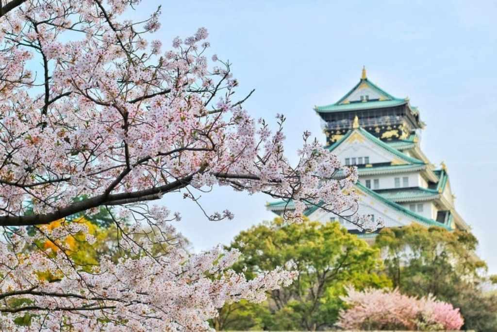 cerezos en flor en japon