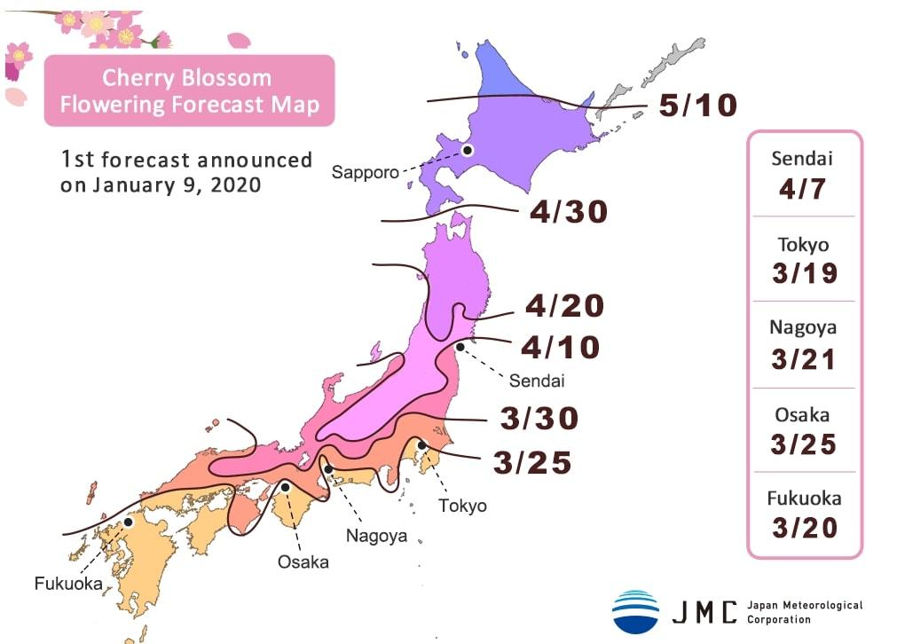 Cerezos en flor en Japón: previsión del año 2020