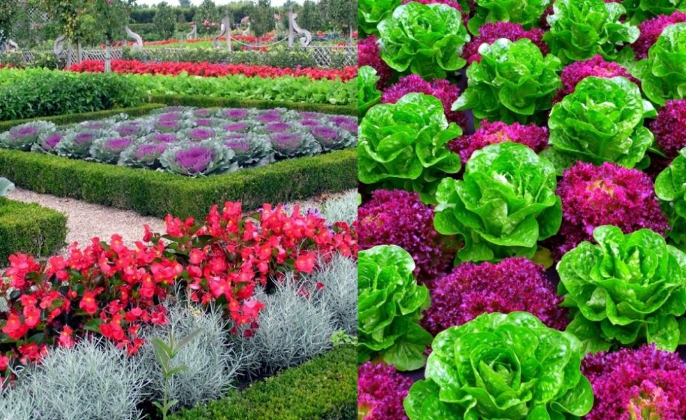Decorative Vegetable Garden Ideas Stylish Green