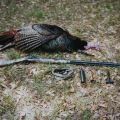 Deer hunting shotguns backyard hunting for deer squirrels and geese