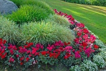 List of Low Maintenance Plants – to read later