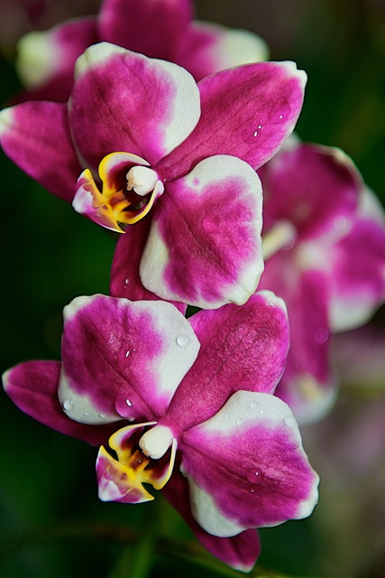 Orchids, orchids, orchids…#orchidshow #nybotanicalgarden