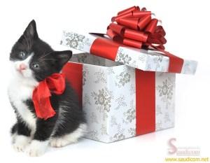 Des idées de cadeaux de Noël pour mon chat
