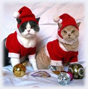 Joyeux Nöel- Merry Christmas- Feliz Natal- Feliz Navidad